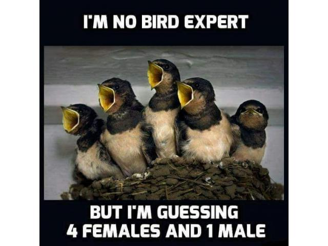 Am no bird expert
